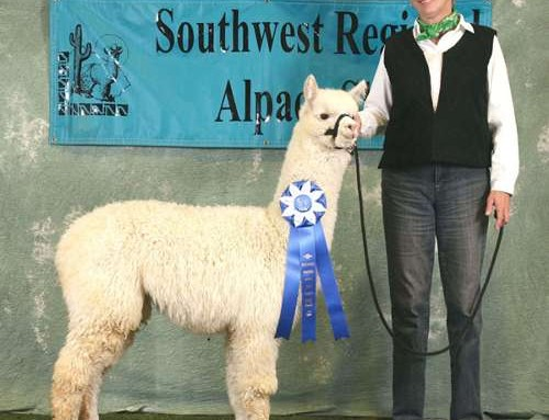 THE 2010 SOUTHWEST REGIONAL ALPACA SHOW (SWRAS) RESULTS FOR SUNDANCER ALPACAS