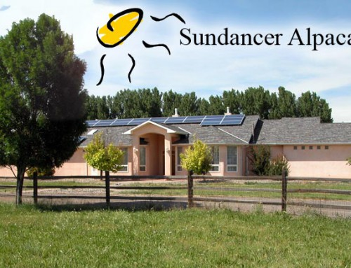 Welcome to Sundancer Alpacas